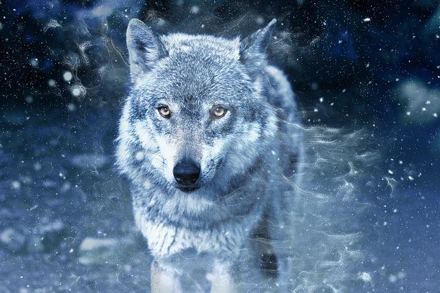 ワンナイトルールと人狼について関係ない所からずっと考えていたこと