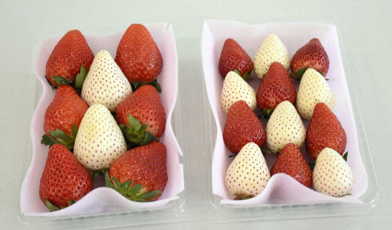 栃木県の白イチゴ「栃木iW1号」と商標登録出願